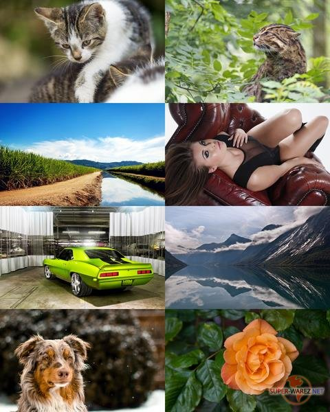 Wallpapers Mix №658