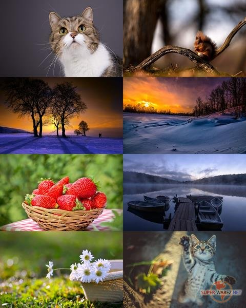 Wallpapers Mix №703